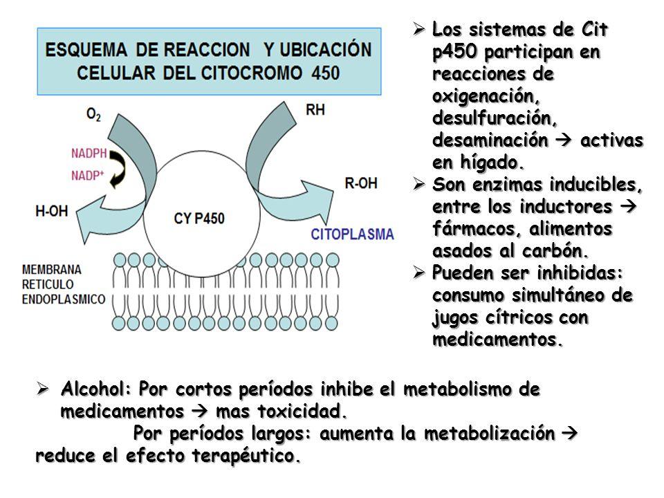 Los sistemas de Cit p450 participan en reacciones de oxigenación, desulfuración, desaminación activas en hígado. Los sistemas de Cit p450 participan e
