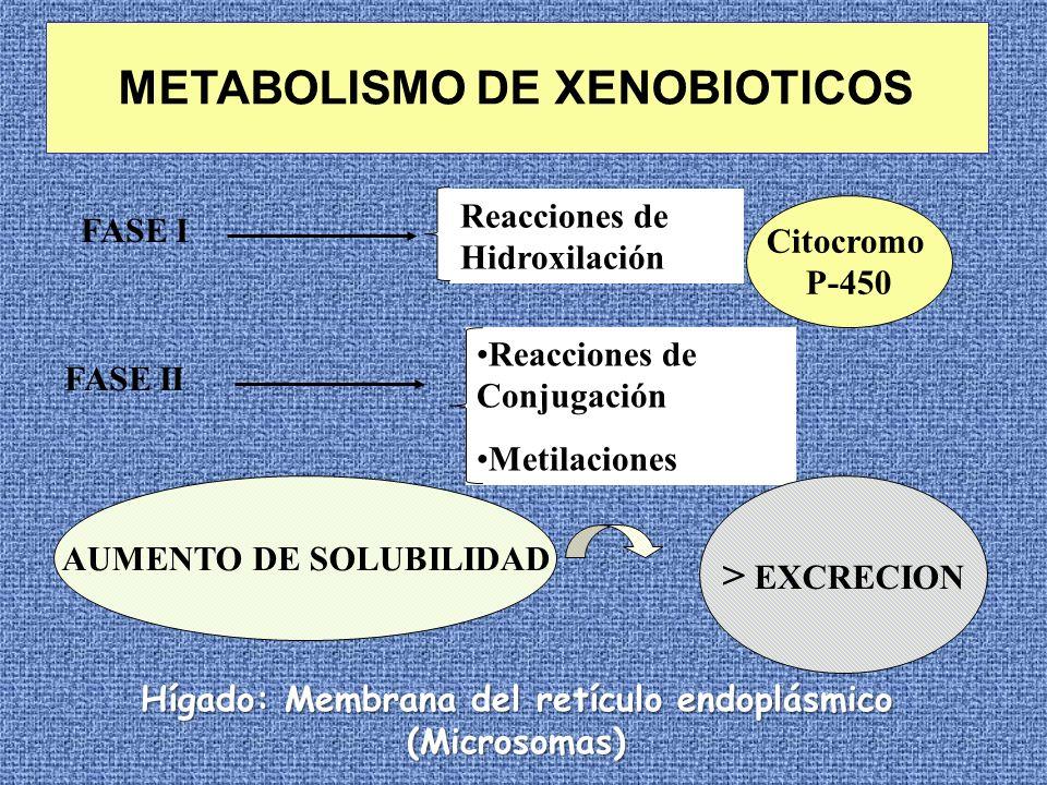 METABOLISMO DE XENOBIOTICOS FASE I FASE II Reacciones de Hidroxilación Reacciones de Conjugación Metilaciones Citocromo P-450 AUMENTO DE SOLUBILIDAD >