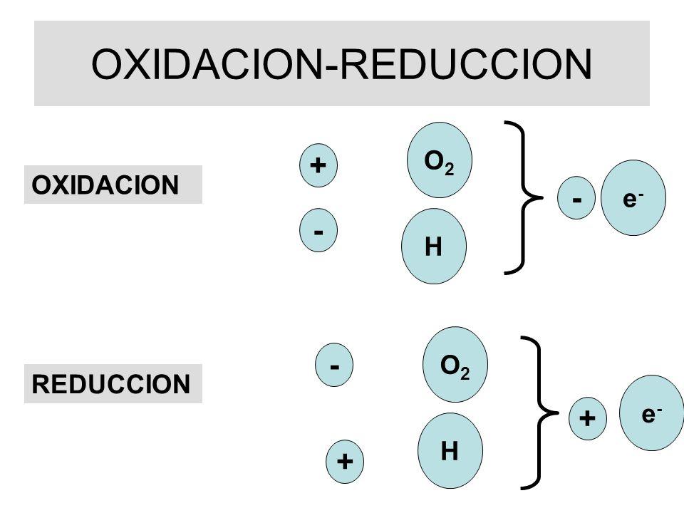 OXIDORREDUCTASAS (DESHIDROGENASAS) Deshidrogenasas ligadas a NAD ó nicotinamídicas Deshidrogenasas ligadas a FAD ó flavínicas AH 2 + NAD + A + NADH + H + AH 2 + FAD (FMN) A + FADH 2 (FMNH 2 ) e- + H + H-H-
