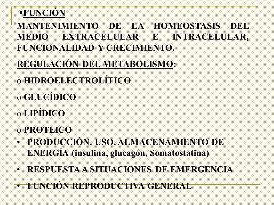 FUNCIÓN MANTENIMIENTO DE LA HOMEOSTASIS DEL MEDIO EXTRACELULAR E INTRACELULAR, FUNCIONALIDAD Y CRECIMIENTO. REGULACIÓN DEL METABOLISMO: o HIDROELECTRO