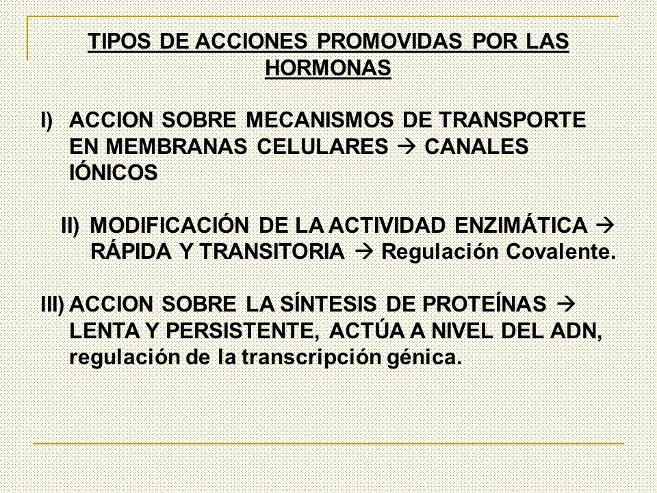 TIPOS DE ACCIONES PROMOVIDAS POR LAS HORMONAS I)ACCION SOBRE MECANISMOS DE TRANSPORTE EN MEMBRANAS CELULARES CANALES IÓNICOS II)MODIFICACIÓN DE LA ACT
