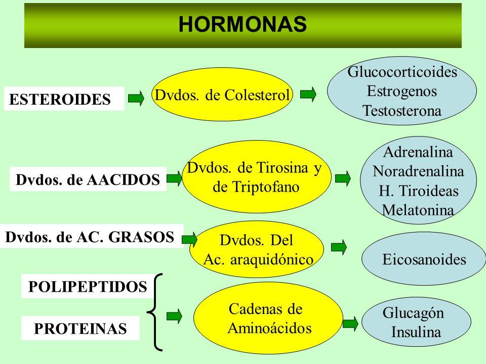HORMONAS POLIPEPTIDOS PROTEINAS Dvdos. de AC. GRASOS ESTEROIDES Dvdos. de AACIDOS Glucocorticoides Estrogenos Testosterona Dvdos. de Colesterol Dvdos.