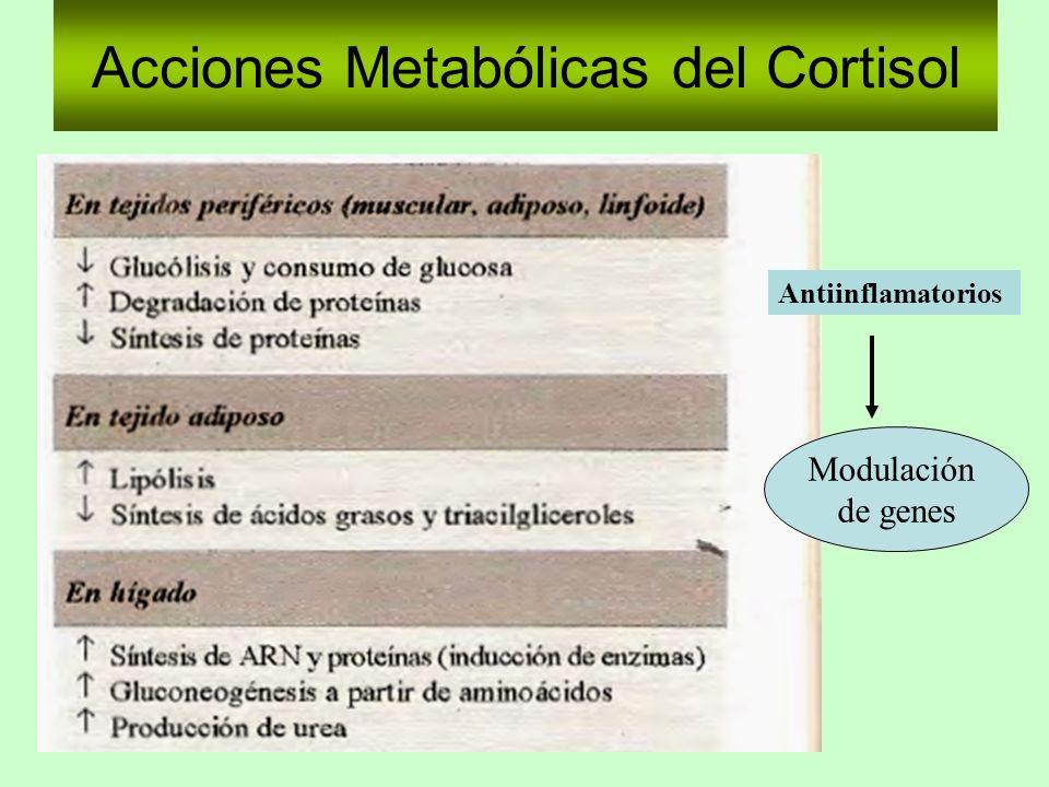 Acciones Metabólicas del Cortisol Antiinflamatorios Modulación de genes