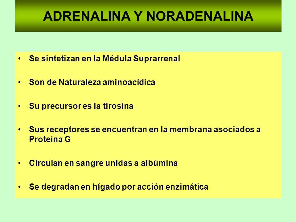 ADRENALINA Y NORADENALINA Se sintetizan en la Médula Suprarrenal Son de Naturaleza aminoacídica Su precursor es la tirosina Sus receptores se encuentr
