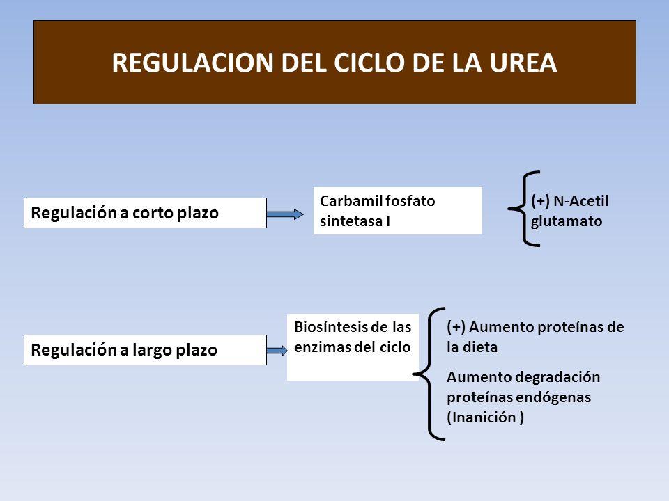 REGULACION DEL CICLO DE LA UREA Regulación a corto plazo Regulación a largo plazo Carbamil fosfato sintetasa I (+) N-Acetil glutamato Biosíntesis de l