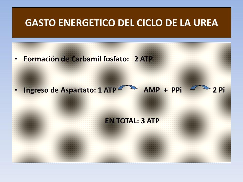 GASTO ENERGETICO DEL CICLO DE LA UREA Formación de Carbamil fosfato: 2 ATP Ingreso de Aspartato: 1 ATP AMP + PPi 2 Pi EN TOTAL: 3 ATP