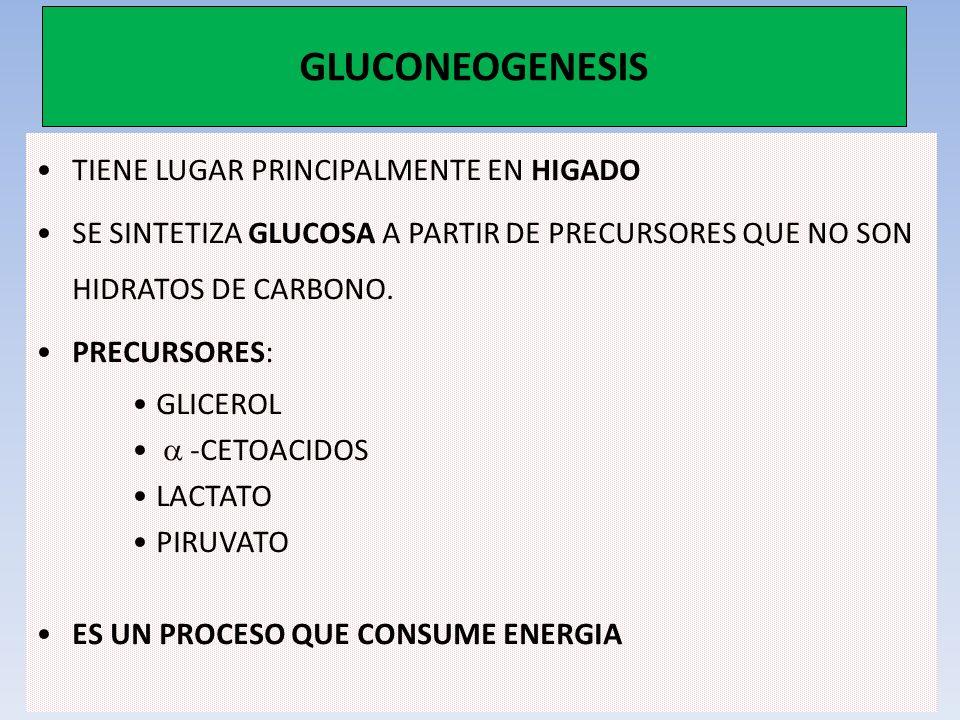 GLUCONEOGENESIS TIENE LUGAR PRINCIPALMENTE EN HIGADO SE SINTETIZA GLUCOSA A PARTIR DE PRECURSORES QUE NO SON HIDRATOS DE CARBONO. PRECURSORES: GLICERO