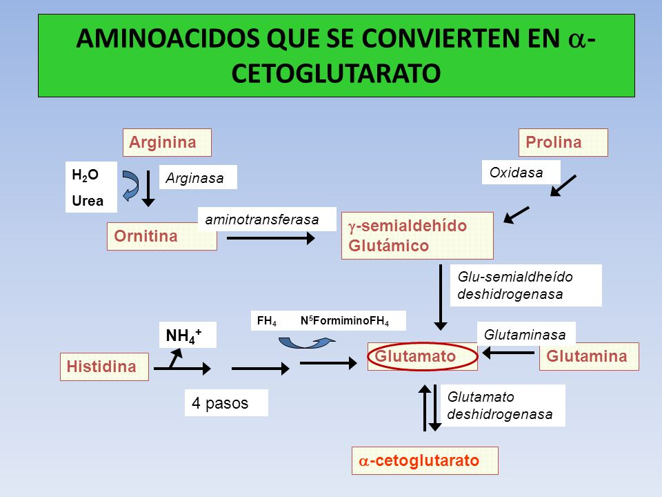 AMINOACIDOS QUE SE CONVIERTEN EN - CETOGLUTARATO Arginina GlutaminaGlutamato Histidina Prolina -cetoglutarato -semialdehído Glutámico Ornitina 4 pasos