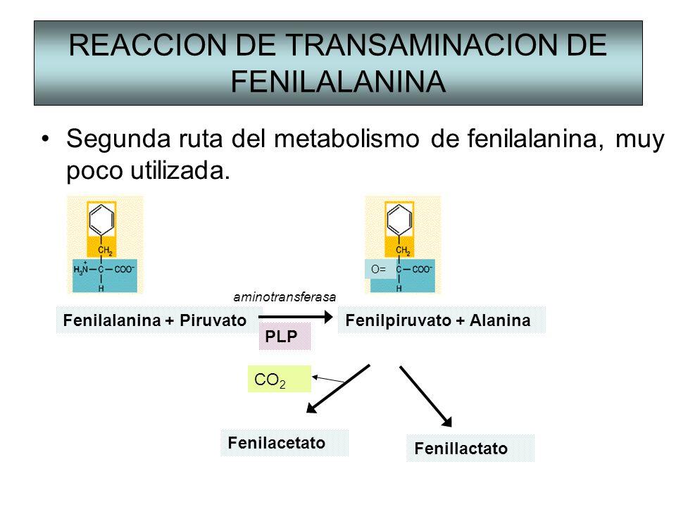 REACCION DE TRANSAMINACION DE FENILALANINA Segunda ruta del metabolismo de fenilalanina, muy poco utilizada. Fenilalanina + PiruvatoFenilpiruvato + Al