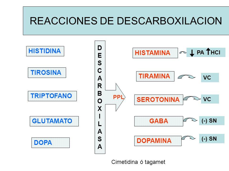 REACCIONES DE DESCARBOXILACION HISTIDINA TIROSINA GLUTAMATO TRIPTOFANO DOPA DESCARBOXILASADESCARBOXILASA PPL HISTAMINA TIRAMINA SEROTONINA GABA DOPAMI