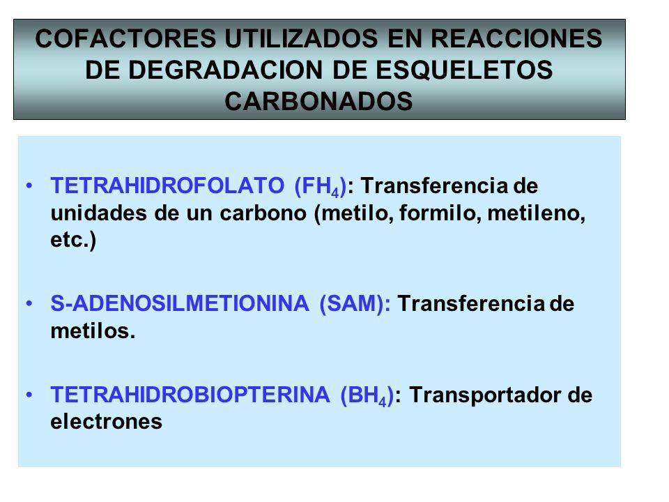 COFACTORES UTILIZADOS EN REACCIONES DE DEGRADACION DE ESQUELETOS CARBONADOS TETRAHIDROFOLATO (FH 4 ): Transferencia de unidades de un carbono (metilo,