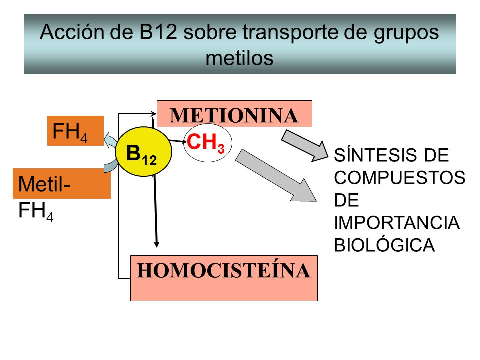 UTILIZACION DE METILOS DE METIONINA EN REACCIONES DE SINTESIS Creatina Colina Adrenalina ARN t metilado Creatina-P Fosfolípidos Hormona Síntesis de proteínas