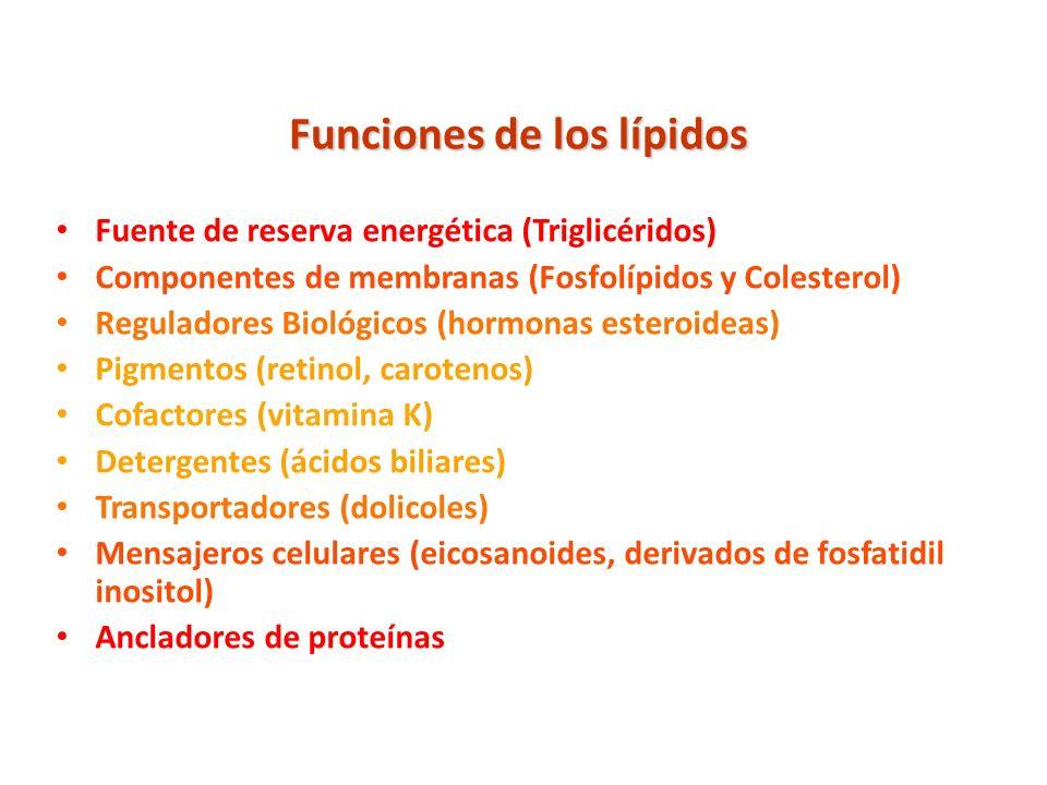 Funciones de los lípidos Fuente de reserva energética (Triglicéridos) Componentes de membranas (Fosfolípidos y Colesterol) Reguladores Biológicos (hor