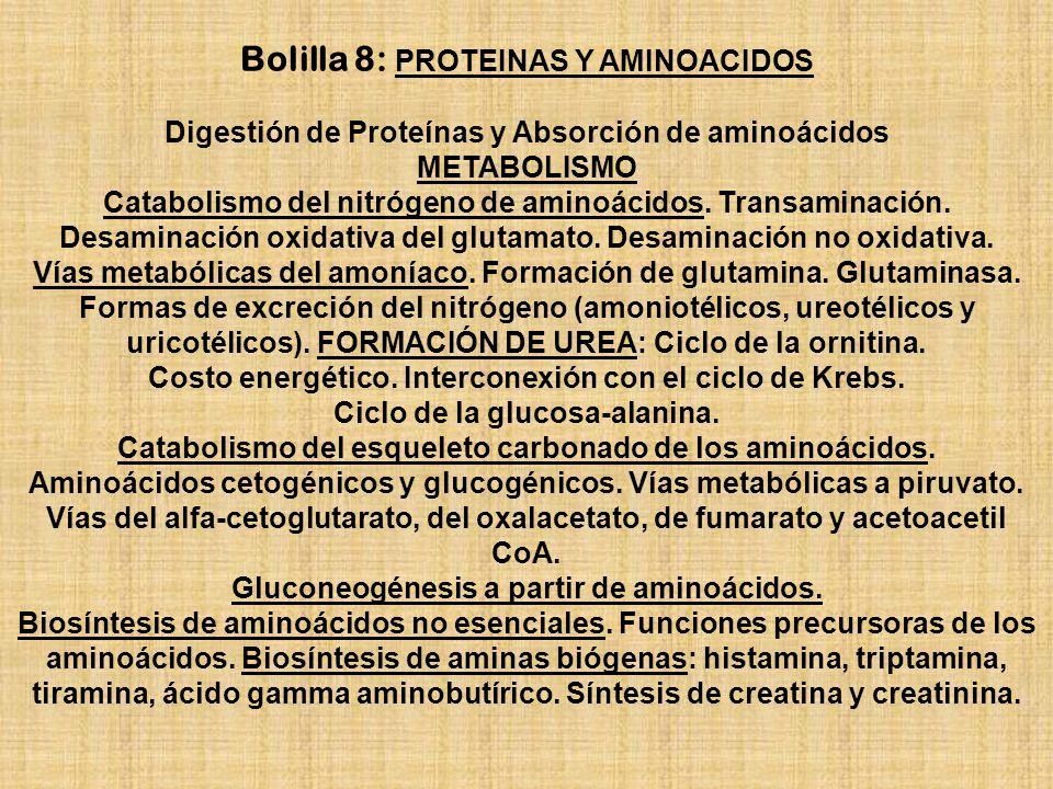 Bolilla 8: PROTEINAS Y AMINOACIDOS Digestión de Proteínas y Absorción de aminoácidos METABOLISMO Catabolismo del nitrógeno de aminoácidos. Transaminac