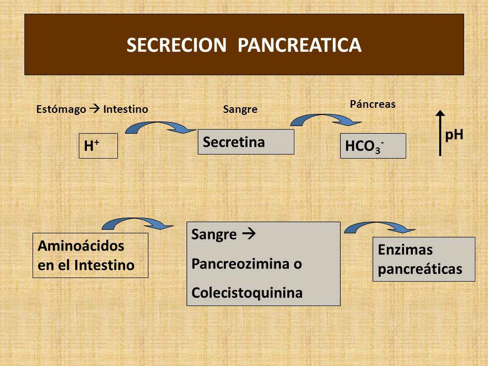 SECRECION PANCREATICA Secretina Sangre Pancreozimina o Colecistoquinina H+H+ Aminoácidos en el Intestino HCO 3 - Enzimas pancreáticas pH Estómago Inte