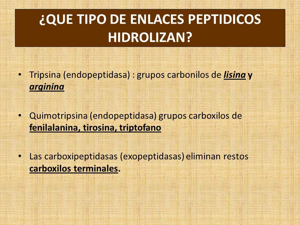 ¿QUE TIPO DE ENLACES PEPTIDICOS HIDROLIZAN? Tripsina (endopeptidasa) : grupos carbonilos de lisina y arginina Quimotripsina (endopeptidasa) grupos car