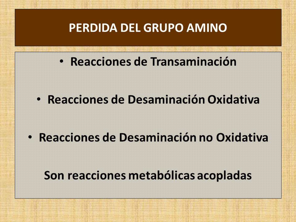PERDIDA DEL GRUPO AMINO Reacciones de Transaminación Reacciones de Desaminación Oxidativa Reacciones de Desaminación no Oxidativa Son reacciones metabólicas acopladas