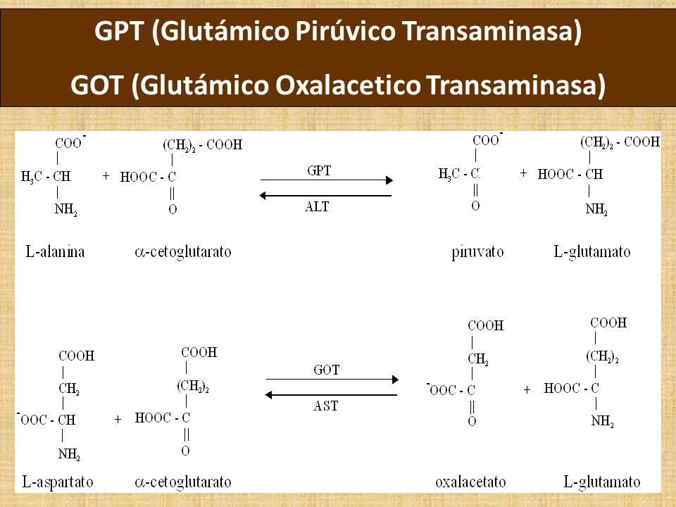 GPT (Glutámico Pirúvico Transaminasa) GOT (Glutámico Oxalacetico Transaminasa)