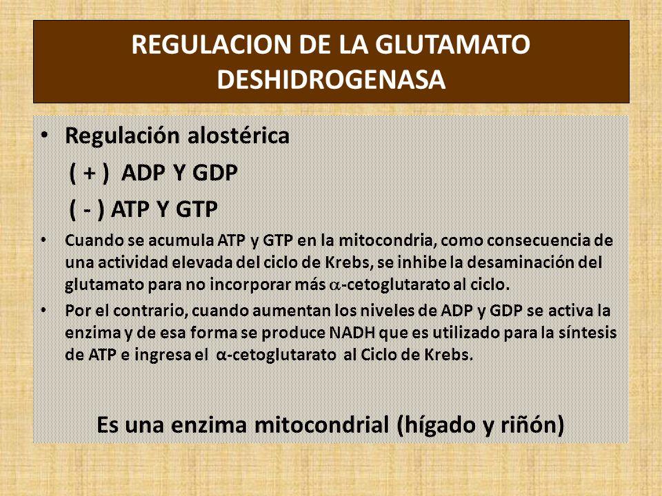 REGULACION DE LA GLUTAMATO DESHIDROGENASA Regulación alostérica ( + ) ADP Y GDP ( - ) ATP Y GTP Cuando se acumula ATP y GTP en la mitocondria, como consecuencia de una actividad elevada del ciclo de Krebs, se inhibe la desaminación del glutamato para no incorporar más -cetoglutarato al ciclo.
