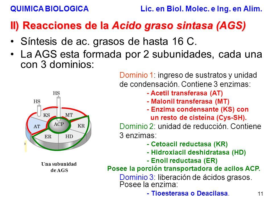 QUIMICA BIOLOGICA Lic. en Biol. Molec. e Ing. en Alim. 11 II) Reacciones de la Acido graso sintasa (AGS) Síntesis de ac. grasos de hasta 16 C. La AGS