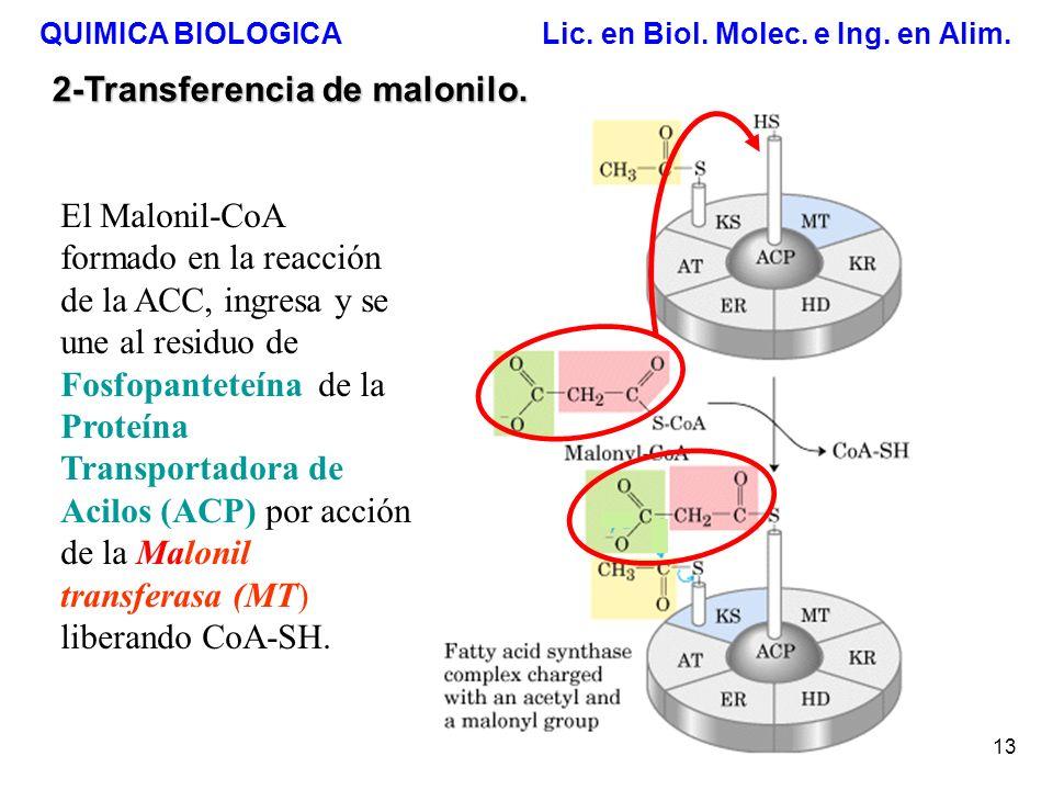 QUIMICA BIOLOGICA Lic. en Biol. Molec. e Ing. en Alim. 13 2-Transferencia de malonilo. El Malonil-CoA formado en la reacción de la ACC, ingresa y se u