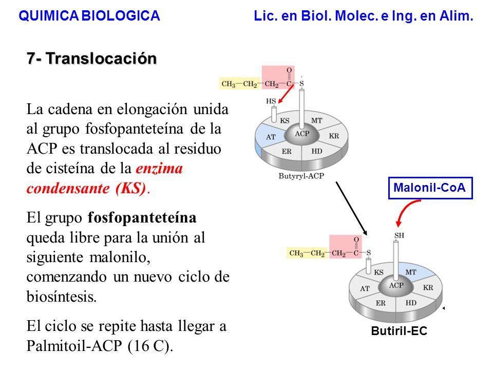 QUIMICA BIOLOGICA Lic. en Biol. Molec. e Ing. en Alim. 7- Translocación Butiril-EC Malonil-CoA La cadena en elongación unida al grupo fosfopanteteína