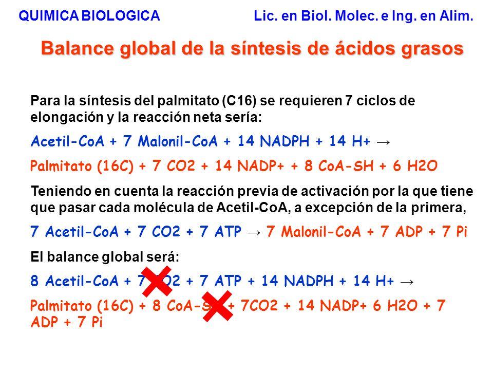 Balance global de la síntesis de ácidos grasos Para la síntesis del palmitato (C16) se requieren 7 ciclos de elongación y la reacción neta sería: Acet