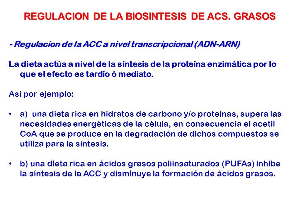24 - Regulacion de la ACC a nivel transcripcional (ADN-ARN) La dieta actúa a nivel de la síntesis de la proteína enzimática por lo que el efecto es ta