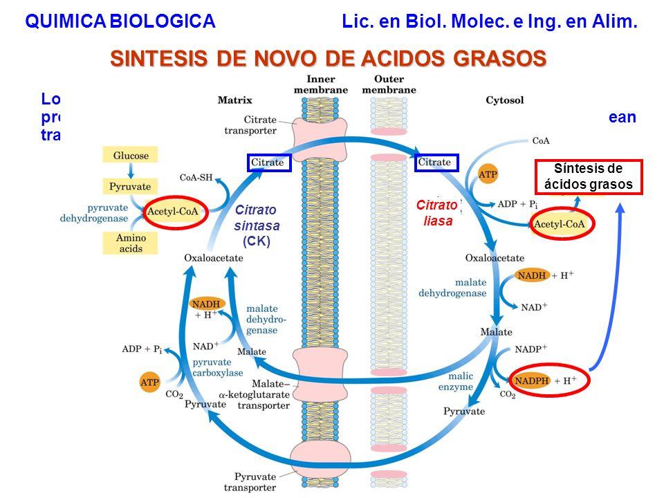 QUIMICA BIOLOGICA Lic. en Biol. Molec. e Ing. en Alim. SINTESIS DE NOVO DE ACIDOS GRASOS Los ac. grasos se sintetizan en el citosol a partir de acetil