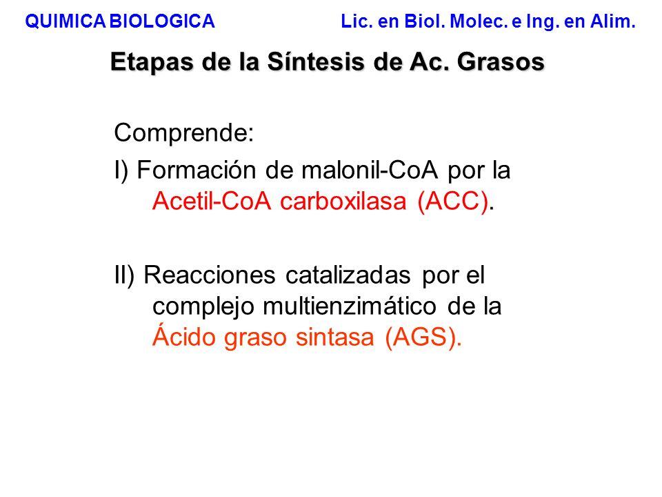 QUIMICA BIOLOGICA Lic. en Biol. Molec. e Ing. en Alim. Etapas de la Síntesis de Ac. Grasos Comprende: I) Formación de malonil-CoA por la Acetil-CoA ca