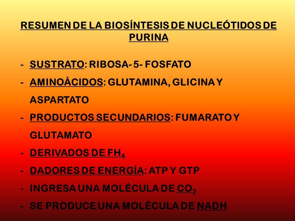 RESUMEN DE LA BIOSÍNTESIS DE NUCLEÓTIDOS DE PURINA -SUSTRATO: RIBOSA- 5- FOSFATO -AMINOÁCIDOS: GLUTAMINA, GLICINA Y ASPARTATO -PRODUCTOS SECUNDARIOS: