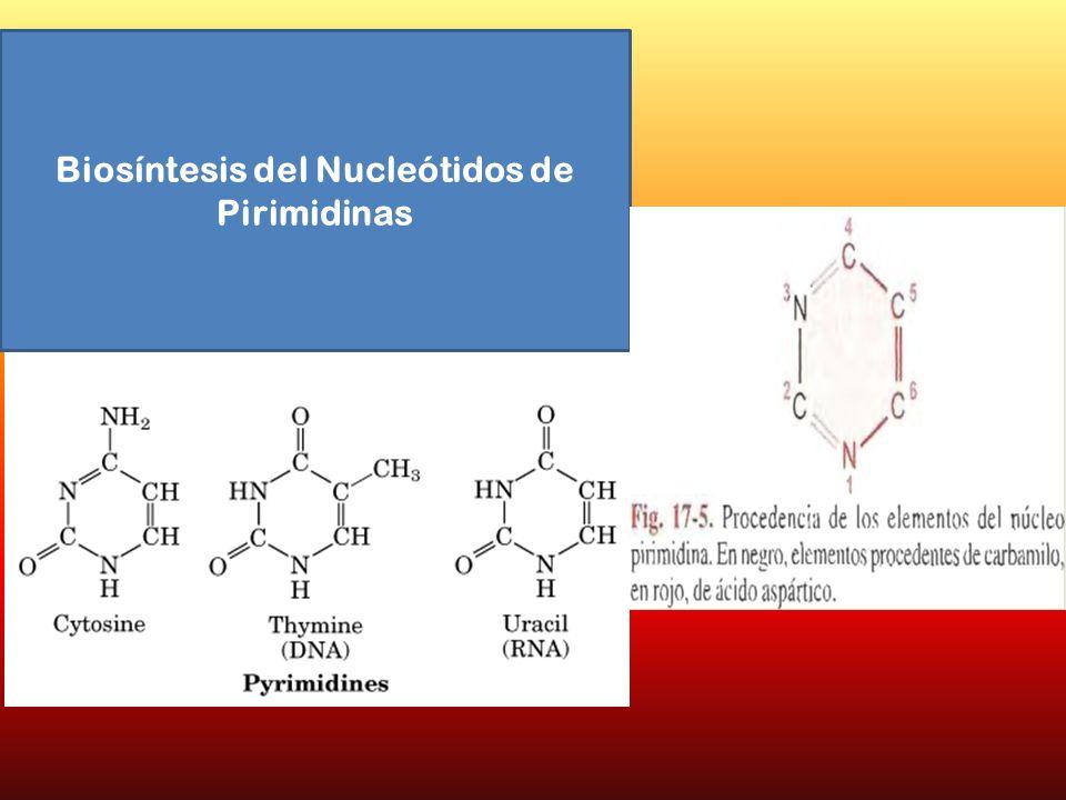 Biosíntesis del Nucleótidos de Pirimidinas
