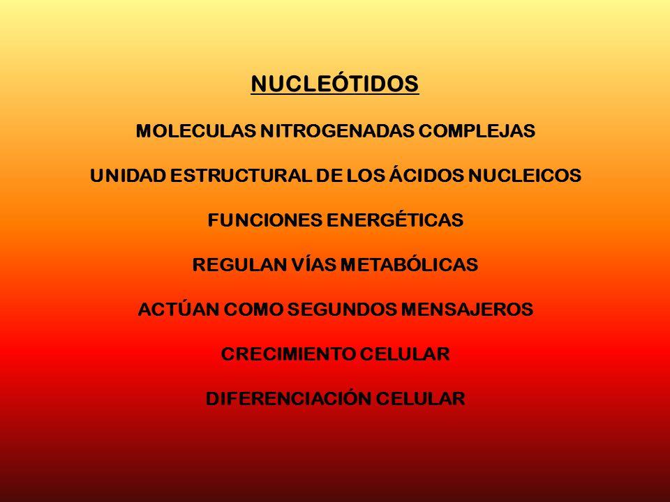 NUCLEÓTIDOS MOLECULAS NITROGENADAS COMPLEJAS UNIDAD ESTRUCTURAL DE LOS ÁCIDOS NUCLEICOS FUNCIONES ENERGÉTICAS REGULAN VÍAS METABÓLICAS ACTÚAN COMO SEG