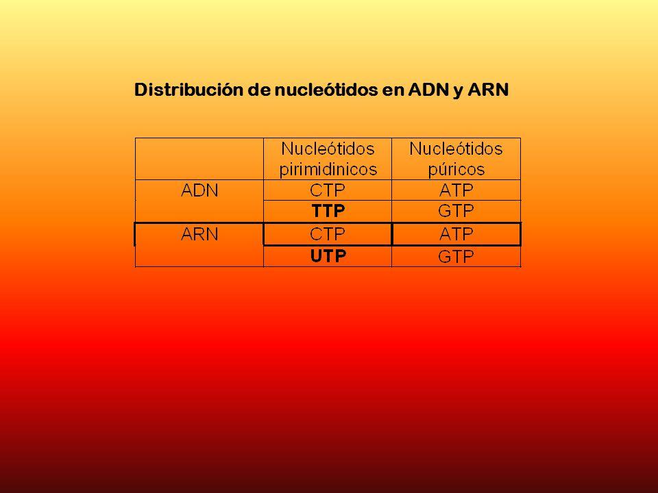 Distribución de nucleótidos en ADN y ARN