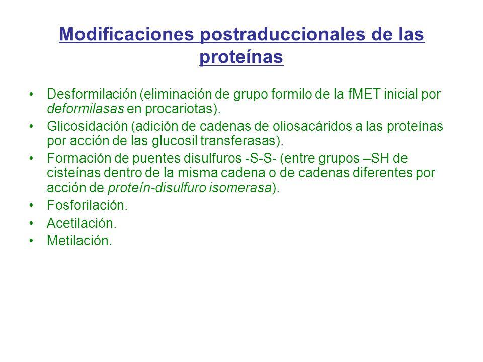 Desformilación (eliminación de grupo formilo de la fMET inicial por deformilasas en procariotas). Glicosidación (adición de cadenas de oliosacáridos a