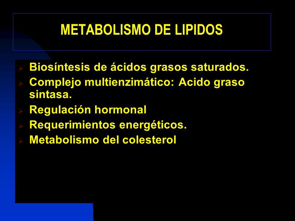 Balance de la Biosíntesis 8 Acetil-CoA + 7 ATP + 14 NADPH + 14 H + Palmitato +8 CoA-SH + 7 ADP + 7 Pi + 14 NADP + + 6 H 2 O Biosíntesis de malonil-CoA Lanzadera de citrato