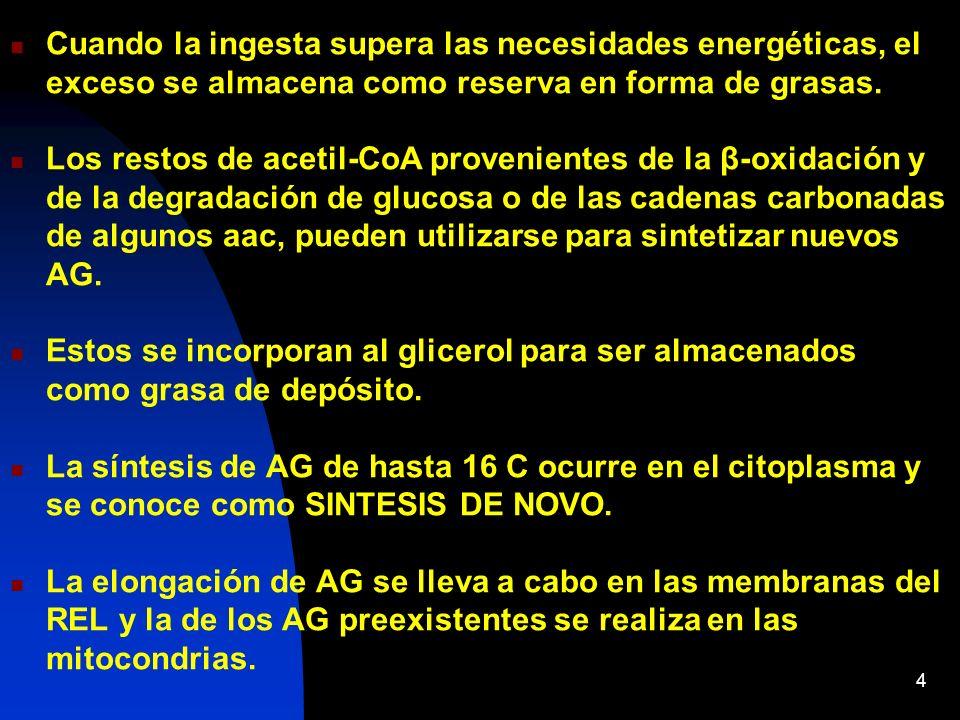 Características generales de la Biosíntesis de ácidos grasos La biosíntesis de AG (lipogénesis) tiene lugar en el CITOSOL, en plantas en los CLOROPLASTOS Es un proceso endergónico: Utiliza ATP Consume equivalentes de reducción : NADPH Es activa cuando el aporte energético es superior a las necesidades de la células Es muy activa en hígado, tejido adiposo, glándula mamaria