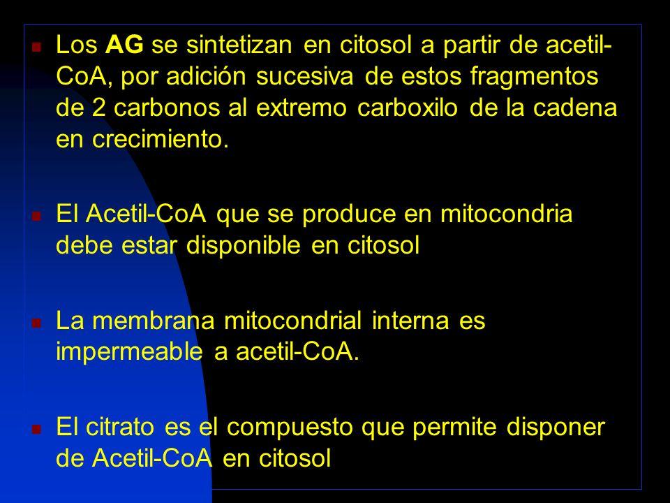 Relación entre el Metabolismo de los H.de C.