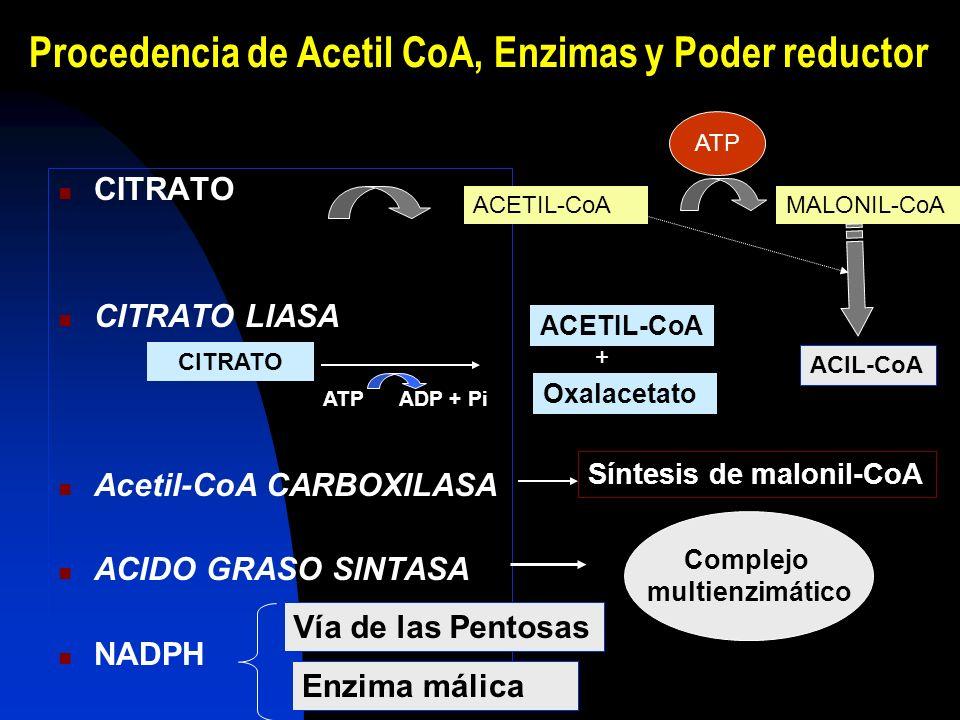 Citrato sintasa Citrato liasa SALIDA DE ACETILOS DE LA MITOCONDRIA AL CITOSOL LANZADERA DE CITRATO Biotina