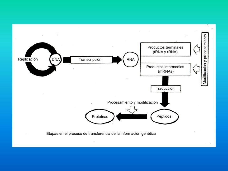 Una molécula de ARN recién sintetizada se denomina TRANSCRIPTO PRIMARIO.