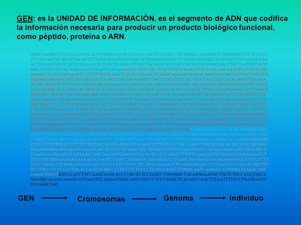 GEN: es la UNIDAD DE INFORMACIÓN, es el segmento de ADN que codifica la información necesaria para producir un producto biológico funcional, como pépt