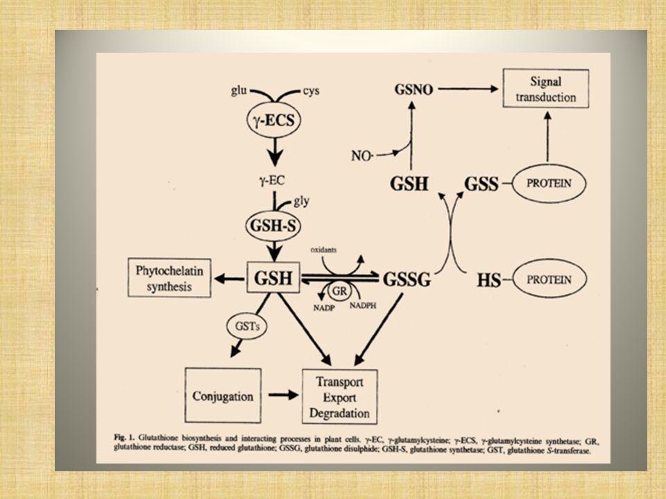 Rol regulatorio múltiple del NADPH NADPH: es un dador básico de electrones en numerosas reacciones de biosíntesis y destoxificación.