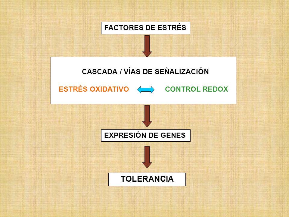 Tema 6:.Metabolismo del óxido nítrico, su papel en la bioquímica del estrés.