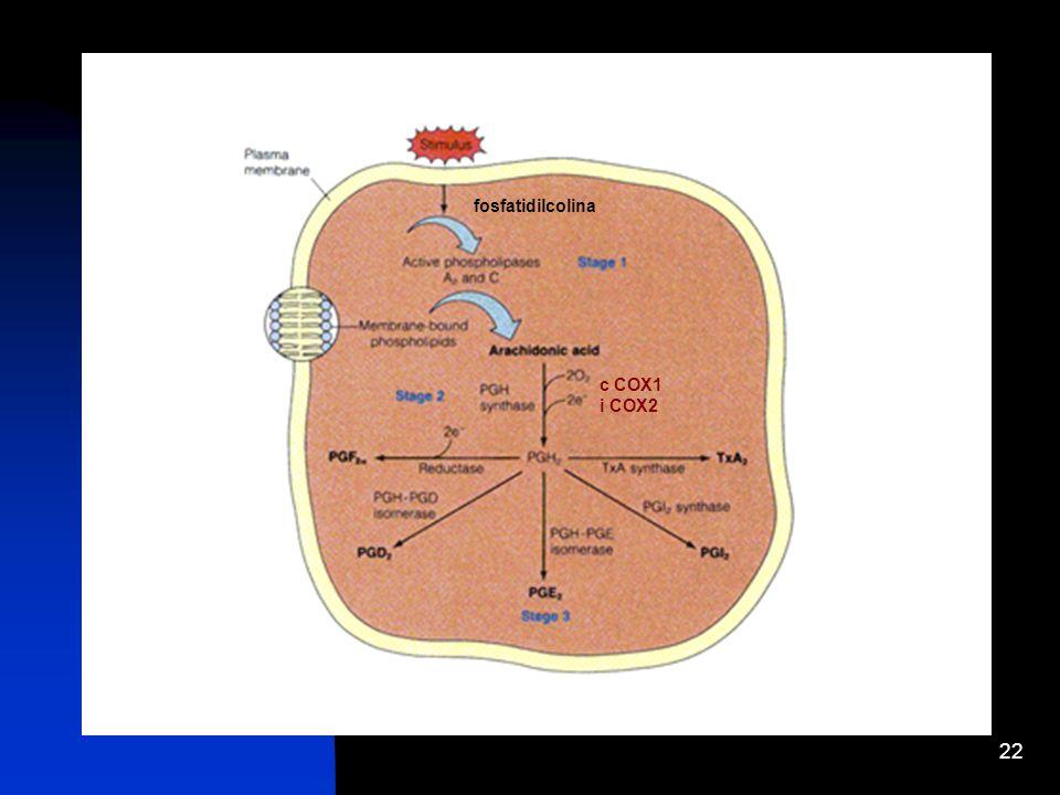 22 fosfatidilcolina c COX1 i COX2