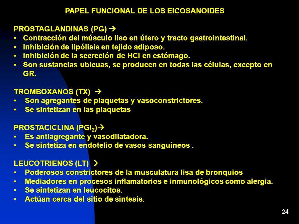 24 PAPEL FUNCIONAL DE LOS EICOSANOIDES PROSTAGLANDINAS (PG) Contracción del músculo liso en útero y tracto gsatrointestinal. Inhibición de lipólisis e