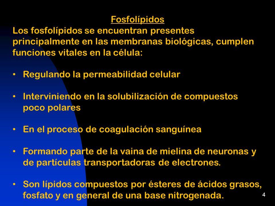 4 Fosfolípidos Los fosfolípidos se encuentran presentes principalmente en las membranas biológicas, cumplen funciones vitales en la célula: Regulando