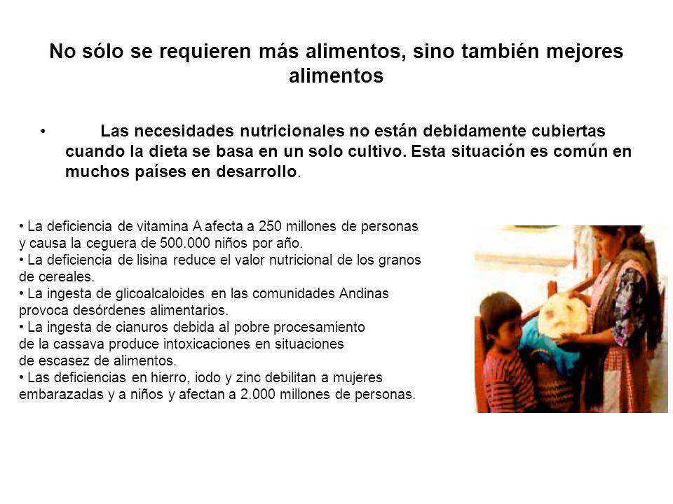 Los Organismos Genéticamente Modificados (OGMs) son parte de la solución Aumentar la producción de alimentos para abastecer el crecimiento poblacional y compensar el descenso de productividad y la reducción de tierra cultivable - Aumentar la eficiencia del mejoramiento - Introducir resistencia a pestes y enfermedades - Introducir tolerancia a temperaturas y sequías - Expandir la producción a suelos marginales Aumentar la calidad nutricional y compensar dietas mal balanceadas - Compensar deficiencias en vitaminas y micronutrientes - Eliminar compuestos tóxicos: cianuros, glicoalcaloides, etc.
