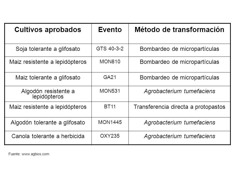 Cultivos aprobadosEventoMétodo de transformación Soja tolerante a glifosato GTS 40-3-2 Bombardeo de micropartículas Maiz resistente a lepidópteros MON810 Bombardeo de micropartículas Maiz tolerante a glifosato GA21 Bombardeo de micropartículas Algodón resistente a lepidópteros MON531 Agrobacterium tumefaciens Maiz resistente a lepidópteros BT11 Transferencia directa a protopastos Algodón tolerante a glifosato MON1445 Agrobacterium tumefaciens Canola tolerante a herbicida OXY235 Agrobacterium tumefaciens Fuente: www.agbios.com