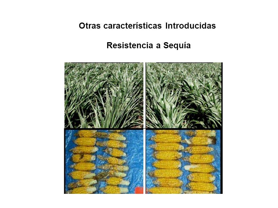 Resistencia a Sequía Otras características Introducidas