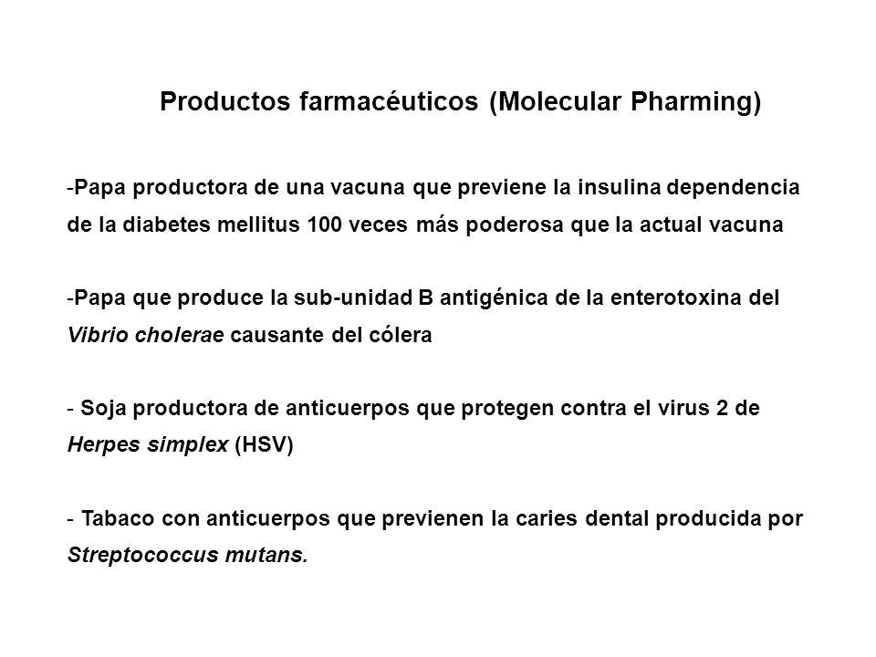 Productos farmacéuticos (Molecular Pharming) -Papa productora de una vacuna que previene la insulina dependencia de la diabetes mellitus 100 veces más poderosa que la actual vacuna -Papa que produce la sub-unidad B antigénica de la enterotoxina del Vibrio cholerae causante del cólera - Soja productora de anticuerpos que protegen contra el virus 2 de Herpes simplex (HSV) - Tabaco con anticuerpos que previenen la caries dental producida por Streptococcus mutans.